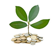 Tree growing from pile of coins Royalty Free Stock Images
