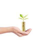 Tree growing from pile of coins Royalty Free Stock Photo