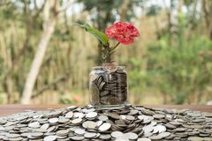 Tree growing from pile of stacked lots coins with blurred background, Money stack for business planning investment royalty free stock photos