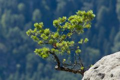 Tree. A tree growing on a rock Stock Image