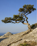 Tree growing on a rock Stock Photo