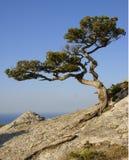 Tree growing on a rock. Crimea. Coast of Black sea. Reserve Stock Photo