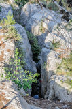 Tree growing in a rock crevice Royalty Free Stock Photos