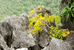 Tree growing in rock on the mountain Stock Photo