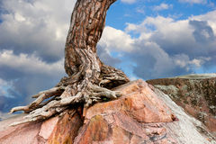 Tree growing on rock Royalty Free Stock Images