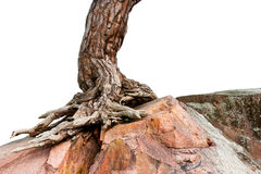 Tree growing on rock Stock Photos