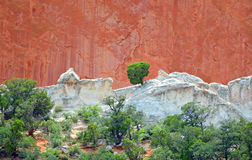 Tree Growing in Rocks with Sandstone and Limestone at Garden of the Gods Colorado Springs Sandstone Stock Photo