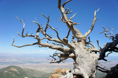 Tree growing on a rocky mountain Royalty Free Stock Photography