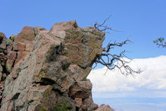 Tree growing on a rocky mountain Stock Photo