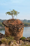 Tree growing on the ruins Stock Photography