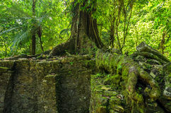 Tree Growing on Ruins Royalty Free Stock Images