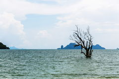 Tree growing in the sea. A tree growing in the sea of Thailand. Cloudy sky and rocks Royalty Free Stock Photo