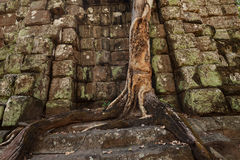 Tree growing in temple Stock Image