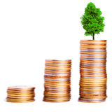 Tree growing on top of a pile of coins Royalty Free Stock Photo