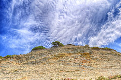 Tree growing on top of the rock Royalty Free Stock Photography