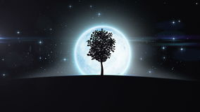 Tree Growing under the New Moon Rising. HD 1080 stock video footage