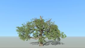 A tree growing up stock illustration