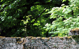 Tree are growing in the wall near the park Sylvia Stock Photography