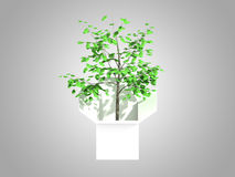 A tree growing from a white cardboard box Royalty Free Stock Images