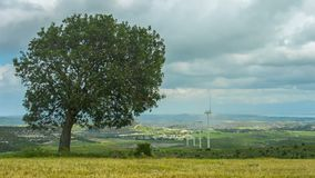Tree growing on wind farm. Autumn landscape. Global responsibility for ecology. Stock footage stock video
