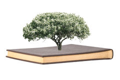Tree grows from the book on white background Stock Photos