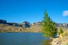 Tree Grows on Lake Edge Stock Photos