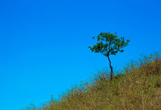 A tree grows on the mountain in the grass Royalty Free Stock Photos