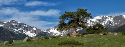 A Tree Grows in the Mountains Royalty Free Stock Photo