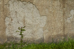 A tree grows near an old wall. A young tree grows near the old wall of the plant Stock Photo