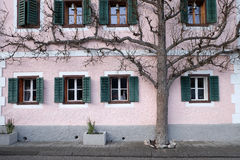 The tree grows next to the house. In Hallstatt, Austria Stock Images