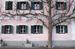 The tree grows next to the house Royalty Free Stock Photography