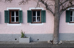 The tree grows next to the house. In Hallstatt, Austria Royalty Free Stock Photography