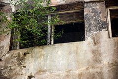 The tree grows out of the window burnt industrial building long ago abandoned. Is close, broken, old, fire, house, danger, damage, black, disaster, wall royalty free stock photo