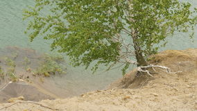 The tree grows over the cliff of a mountain lake. A strong wind makes waves, and swings the branches of a tree stock footage