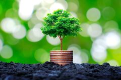 The tree grows on a pile of coins or money.
