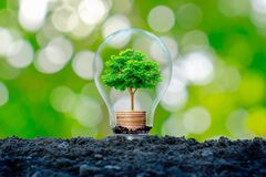 The tree that grows on a pile of money in a light bulb with a green nature blur background.
