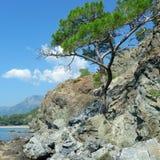 Tree grows. On the rocky shore Stock Photos