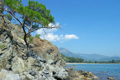 Tree grows on rocky shore Royalty Free Stock Image