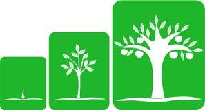 Tree grows Stock Photo