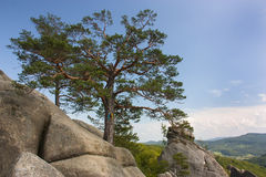 A tree grows in stone Stock Photo