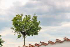Tree grows on the tile roof of a house in Prague, Czech Republic royalty free stock photos