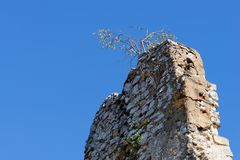 Tree grows on top of ruin of medieval castle wall. On blue sky background Royalty Free Stock Photography
