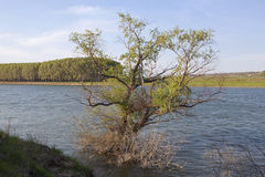 Tree grows in the water Royalty Free Stock Images