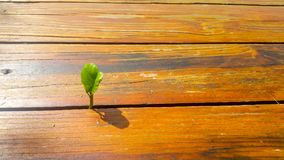 Tree grows from wood Royalty Free Stock Photography