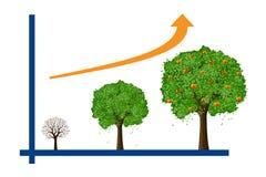 Tree growth Royalty Free Stock Image