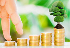 Tree growth on coins. Tree growth on soil with golden coins and fresh nature background blurred Stock Photo