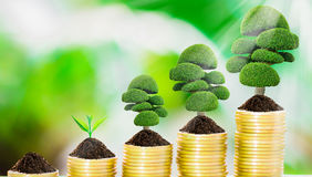 Tree growth on coins. Tree growth on soil with golden coins and fresh nature background blurred Royalty Free Stock Photo