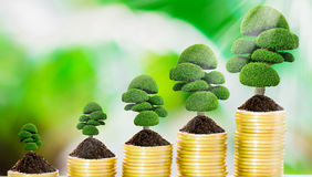 Tree growth on coins. Tree growth on soil with golden coins and fresh nature background blurred Royalty Free Stock Photography