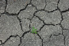 Tree growth on Cracked Soil Royalty Free Stock Images