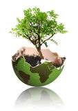 Tree growth from earth Royalty Free Stock Photos
